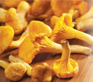 Chanterelle-mushrooms-dried-300x182b