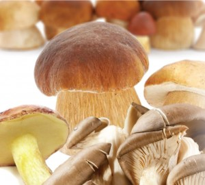 mixed-mushrooms-driedb